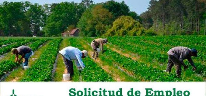Empleo agrario